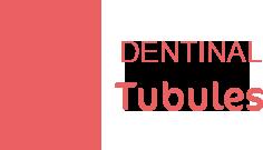 dentinal tubules logo1